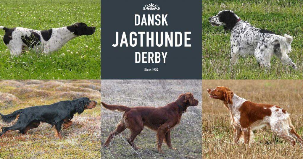 Dansk Jagthunde Derby for de 5 engelske stående fuglehunde
